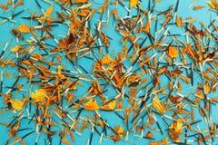 Heldere gele en oranje zaden en bloemblaadjes van bloemen op een blauwe achtergrond stock afbeeldingen
