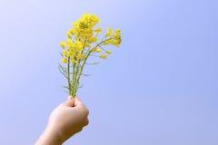 Heldere gele napusbloemen in hun handen Royalty-vrije Stock Afbeeldingen