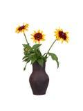 Heldere gele rudbeckia of de Zwarte die Eyed bloemen van Susan op een wit wordt geïsoleerd Royalty-vrije Stock Fotografie