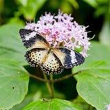 Heldere gele vlinder Stock Afbeelding