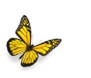 Heldere Gele Vlinder die op Wit wordt geïsoleerdr Stock Afbeelding