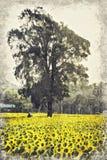 Heldere gele zonnebloem, Thailand Digitaal Art Impasto Oil Paint stock fotografie