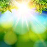 Heldere glanzende zon met lensgloed Abstracte de lenteachtergrond w Royalty-vrije Stock Foto's