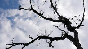 Heldere hemel door mooie houten schaduwen stock foto