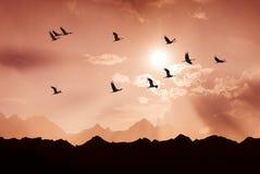 Heldere hemel op zonsondergang of zonsopgang met vliegende vogels natuurlijke backgr royalty-vrije stock afbeelding