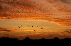 Heldere hemel op zonsondergang of zonsopgang met vliegende vogels natuurlijke backgr stock afbeeldingen