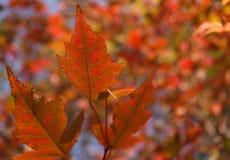 Heldere kleuren Royalty-vrije Stock Afbeeldingen