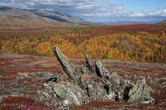 Heldere kleuren van de herfst in de bergen stock afbeelding