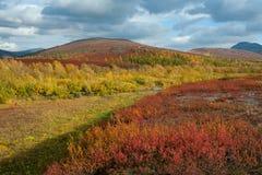 Heldere kleuren van de herfst in de bergen stock afbeeldingen