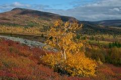 Heldere kleuren van de herfst in de vallei royalty-vrije stock afbeelding
