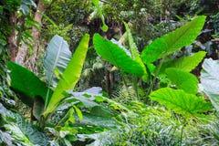 Heldere kleurrijke groene installaties op tropische siertuin natuurlijke achtergrond in het aardpark Gemodelleerd architectuurgeb stock afbeeldingen