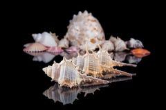 Heldere kleurrijke overzeese die shells over een donkere achtergrond wordt gegroepeerd stock foto's