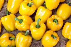 Heldere kleurrijke paprika's die op wit worden geïsoleerdb Stock Afbeeldingen