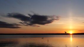 Heldere kleurrijke Zonsondergang op meer, zeemeeuwenvlieg over water stock videobeelden