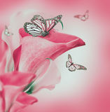Heldere knoppencallas en vlinder Stock Foto