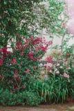 Heldere mooie bloeiende tuin met rode en roze bloemen Stock Afbeelding