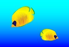 Heldere oceanic kleine vissen Stock Foto's