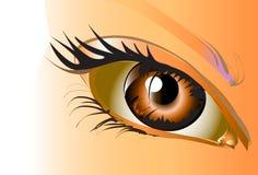 Heldere ogen Stock Foto's