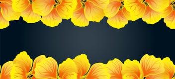 Heldere Oostindische kers Naadloze grens Gele bloemen Mooie Horizontale banner Donkere achtergrond Kaart, uitnodiging, affiche Stock Fotografie
