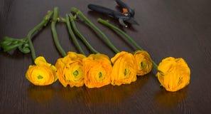 Heldere oranje bloemen op donkere houten lijst Royalty-vrije Stock Fotografie