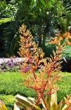 Heldere oranje flora royalty-vrije stock afbeelding