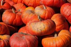 Heldere oranje pompoen Royalty-vrije Stock Foto