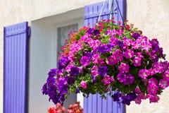 Heldere petuniabloemen op een achtergrond van de huismuur Royalty-vrije Stock Foto