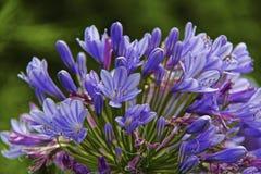 Heldere purpere bloem stock foto
