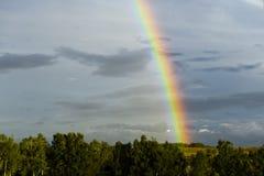 Heldere regenboog in de hemel met donkere wolken op de achtergrond van bomen Stock Afbeeldingen