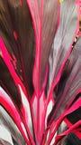 Heldere rode bladeren Royalty-vrije Stock Afbeeldingen