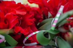 Heldere rode bloemen van gladiolenclose-up Stock Foto's