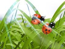 Heldere rode Dame Bug royalty-vrije illustratie