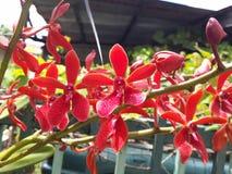 Heldere rode orchidee royalty-vrije stock afbeeldingen