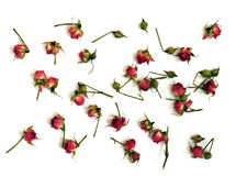 Heldere rode rozen op een witte achtergrond Stock Afbeeldingen