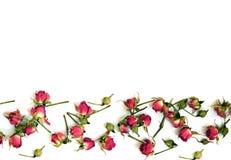 Heldere rode rozen op een witte achtergrond Stock Fotografie