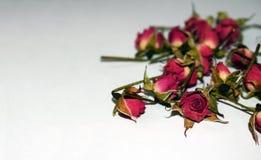 Heldere rode rozen op een witte achtergrond Royalty-vrije Stock Afbeeldingen