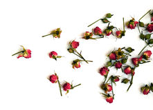 Heldere rode rozen op een witte achtergrond Royalty-vrije Stock Foto