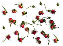 Heldere rode rozen op een witte achtergrond Royalty-vrije Stock Foto's