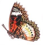 Heldere roodbruine vlinder met een sierzigzagcontour Stock Foto's