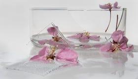 Heldere roze bloemen van de appelboom, gele meeldraad, close-up in het water dichtbij de gebroken glasschotel, luchtbellen op wit Royalty-vrije Stock Foto