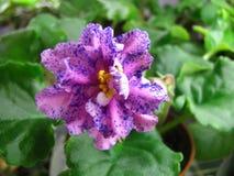 Heldere roze golvende bloem met overvloedige slagen van blauwe fantasie op groene achtergrond Royalty-vrije Stock Fotografie