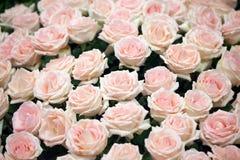 Heldere roze rozen Royalty-vrije Stock Fotografie
