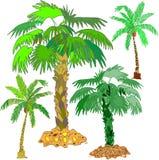 Heldere schitterende palmen Royalty-vrije Stock Foto's