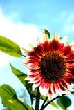 Heldere Sunshiny Dag! Royalty-vrije Stock Foto's