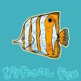 Heldere tropische overzeese vissen Stock Foto's
