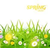 Heldere vectorillustratie Gras en bloemenachtergrond De lenteontwerp Stock Fotografie