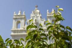 Heldere verse groene bladeren op de takken van een struik op een vage achtergrond van een witte Katholieke kerk onder een duideli royalty-vrije stock foto