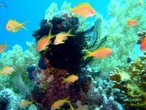 Heldere Vissen en lelie in blauw Stock Foto's