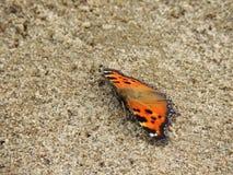 Heldere vlinder in het zand Stock Foto