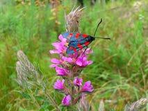Heldere vlinder op roze bloem Stock Afbeeldingen